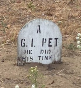 GI Pet